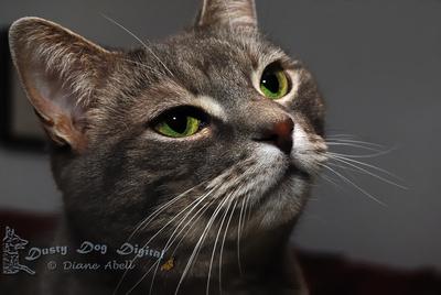 Dusty Dog Digital: We love our pets. &emdash;